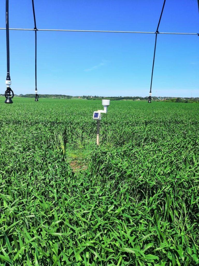 Автоматический полив с датчиком влажности почвы